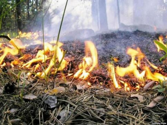 В Самаре горел лес в черте города