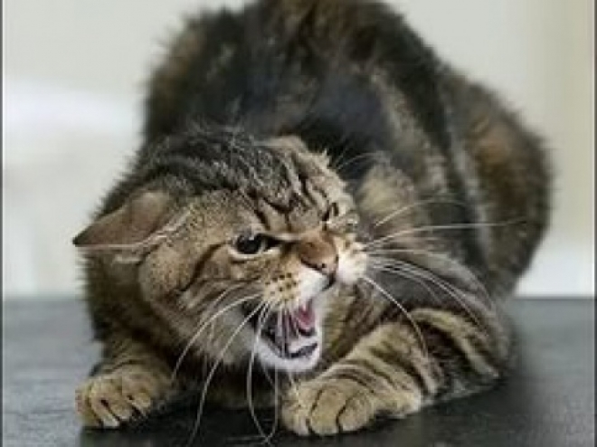 В Самарской области бешенством заболела кошка
