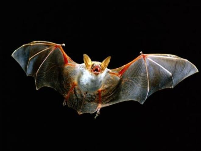В Самарской области появится музей летучих мышей