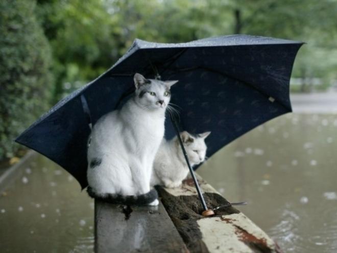 В среду в Самаре будут лить дожди