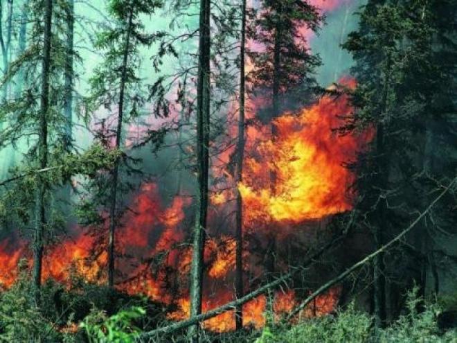 В Кинельском районе Самарской области горел лес