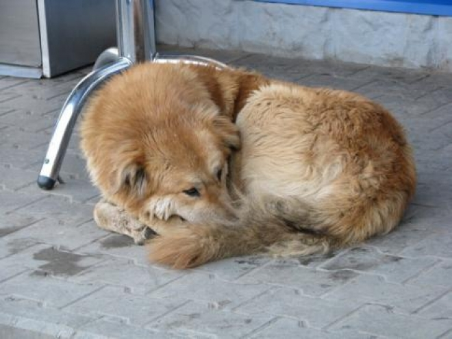 В Самаре продолжат отлов бродячих собак