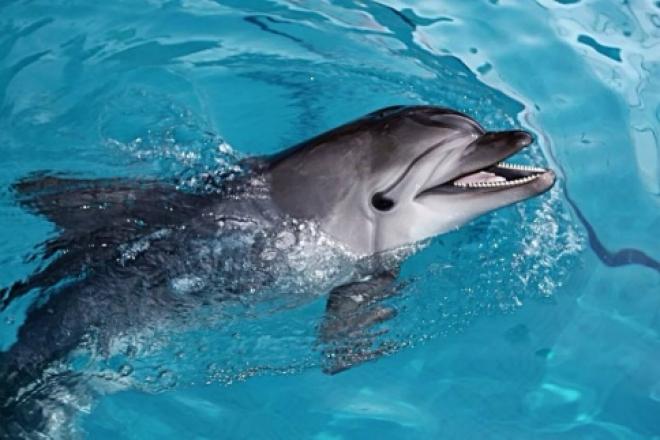 Через 36 месяцев в Самаре появится дельфинарий