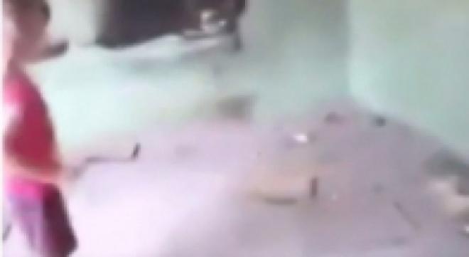 Александр Бастрыкин поручил провести проверку по факту убийства котенка в Самарской области