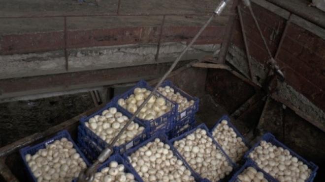 На овощной базе в Самаре хранили запрещённые грибы