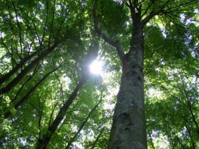 Часть самарских лесов закрыли для посещений