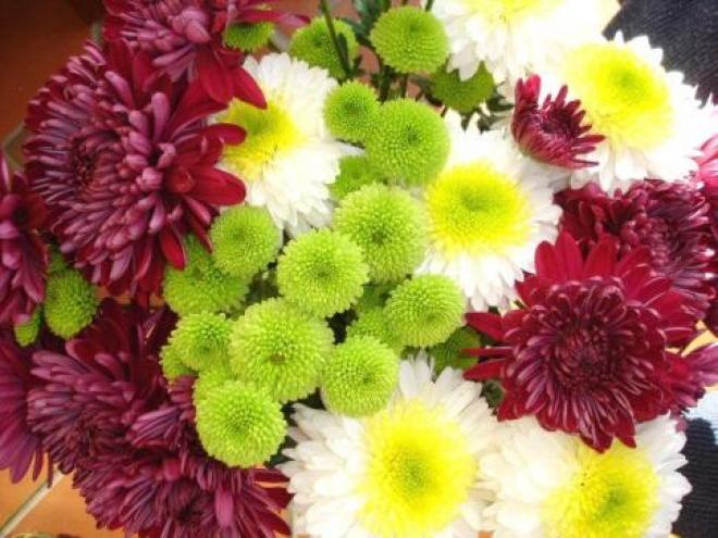 Самарские цветы под угрозой