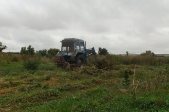 В Самарской области уничтожили целое поле конопли